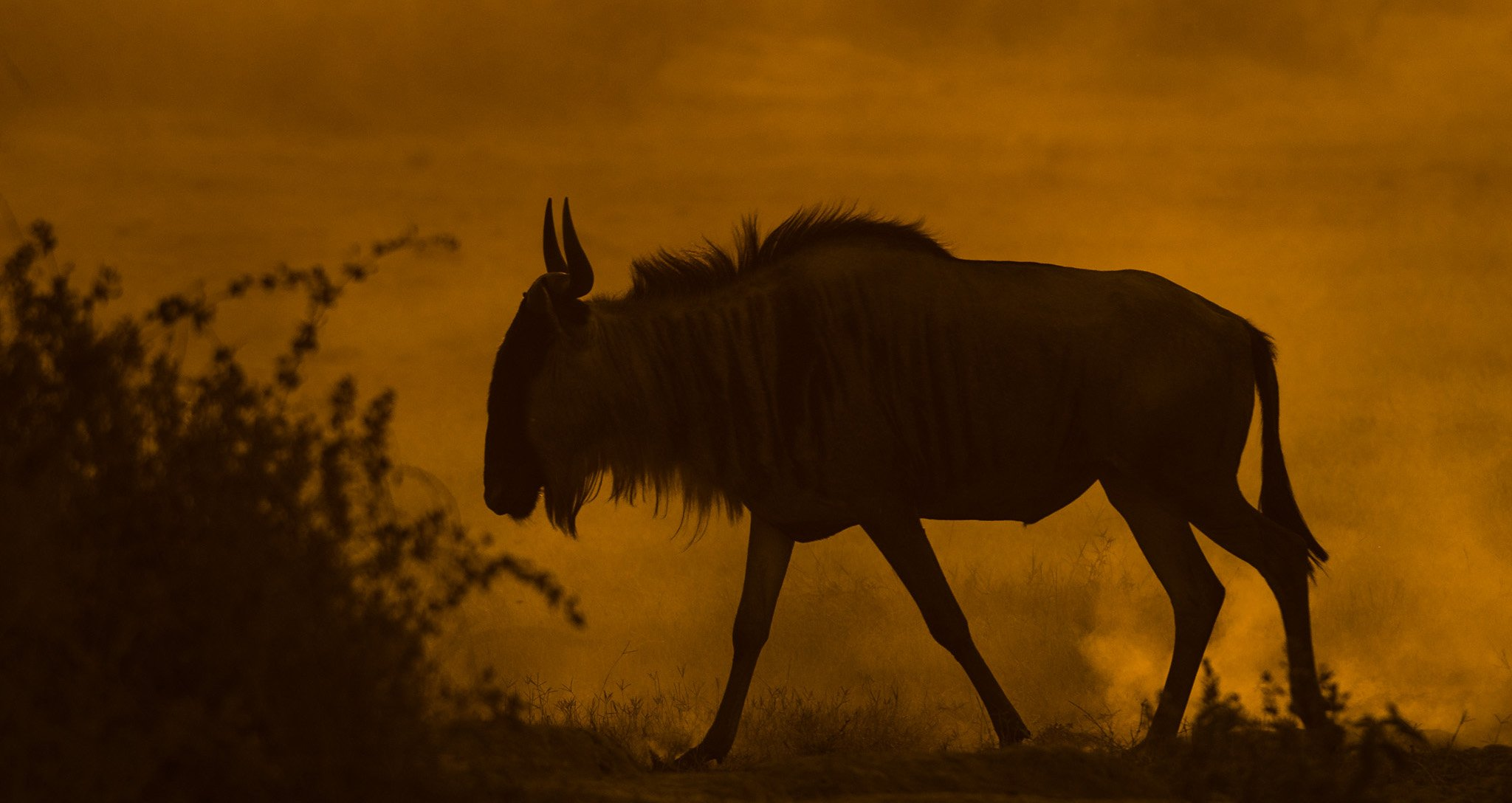 Wildebeest Silhouette blog featured image